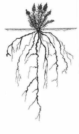 La Planta Partes De Una Planta Y Sus Funciones Básicas