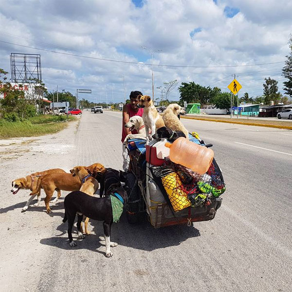 Facebook: Hombre recorre México curando a perros callejeros