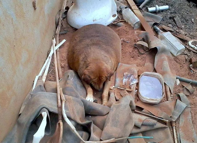 perro-obeso-1