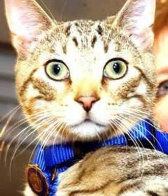 Fred, el gato policía