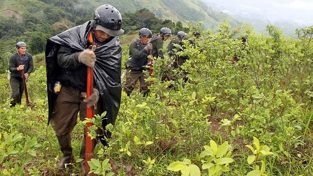 Corah supera meta anual de erradicación de cultivos ilegales de hoja de coca