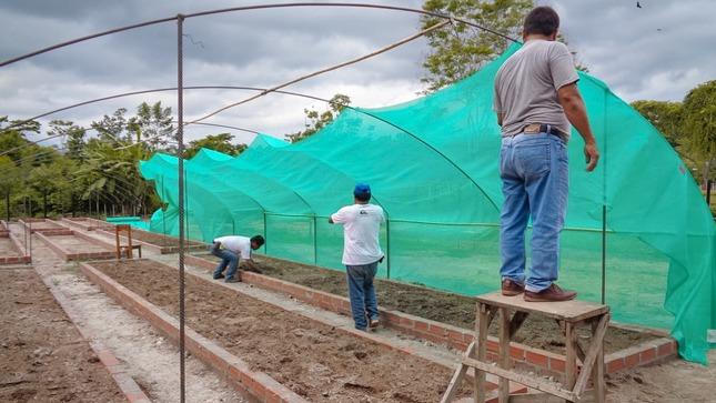 Instalan viveros de bambú en beneficio de más de 9 mil familias productoras de Amazonas