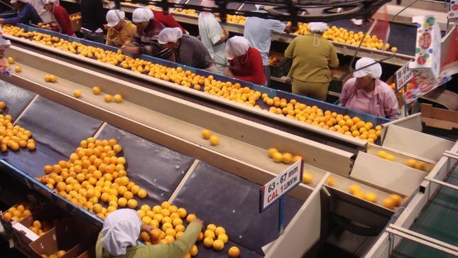 Standard agroexportacion2