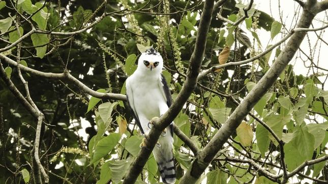 Reserva Nacional Allpahuayo Mishana de Loreto será escenario de maratón de avistamiento de aves