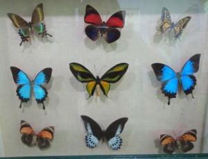 菲律賓語言學校,Go Education遊學顧問,菲律賓留學,蝴蝶園