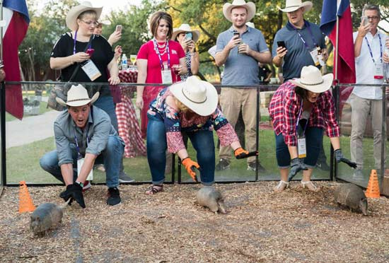 San Antonio armadillo racing for events