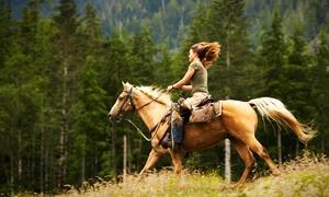 Passeggiata a cavallo -85%