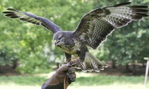 Falconiere e tiro con l'arco