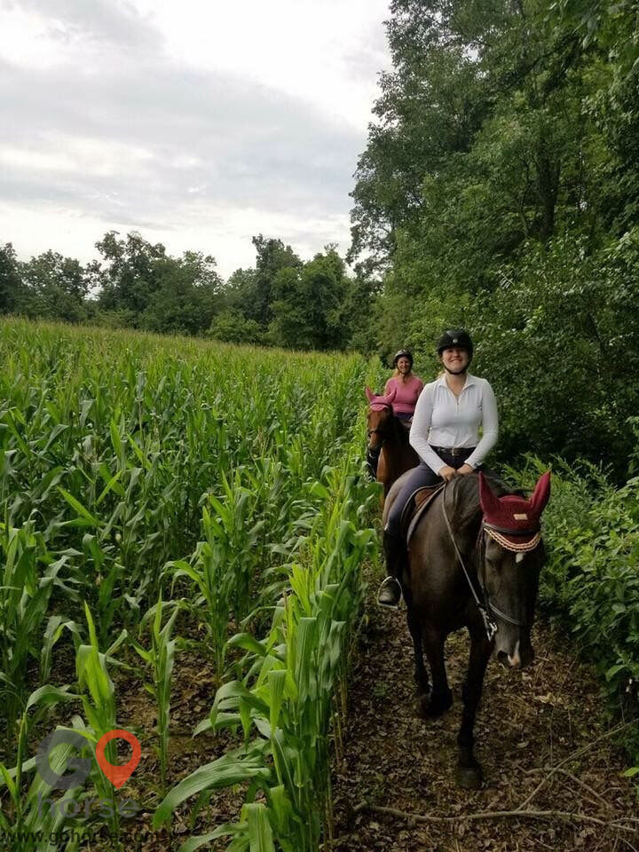 Top Line Stables, LLC Horse stables in Atglen PA 1