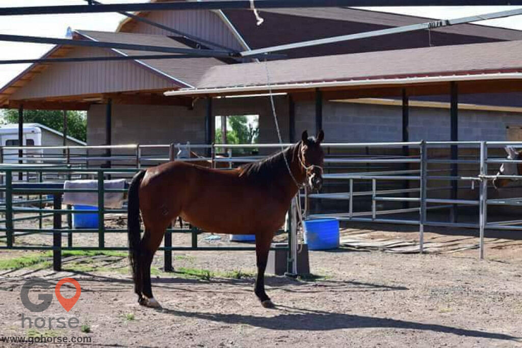 Stable Acres Horse stables in Gilbert AZ 1