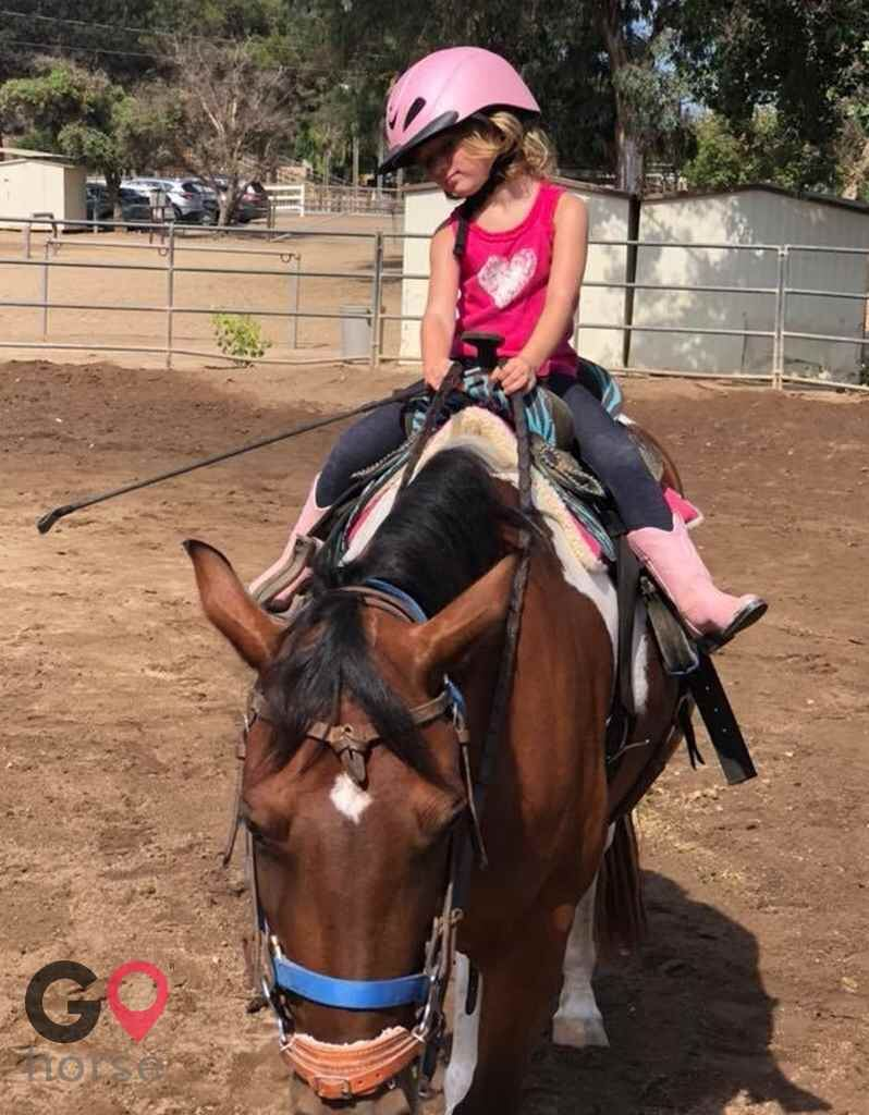 Back to Basics Horsemanship (horse trainer) a horse business in Poway CA 9