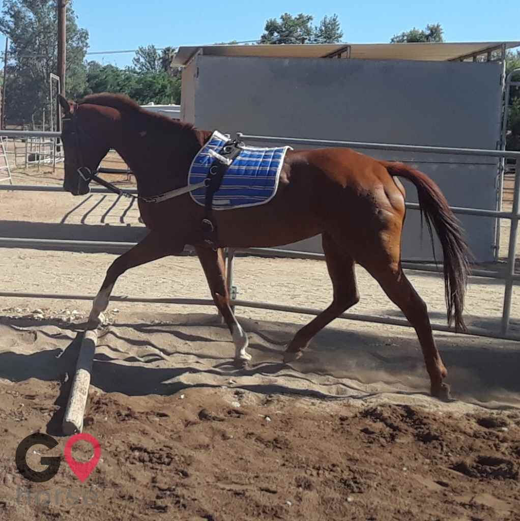 Back to Basics Horsemanship (horse trainer) a horse business in Poway CA 19