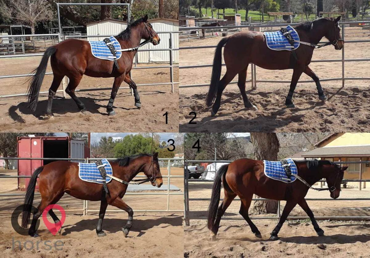 Back to Basics Horsemanship (horse trainer) a horse business in Poway CA 16