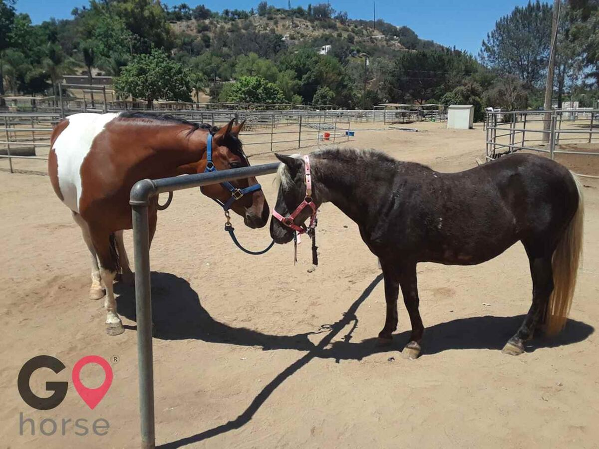 Back to Basics Horsemanship (horse trainer) a horse business in Poway CA 1