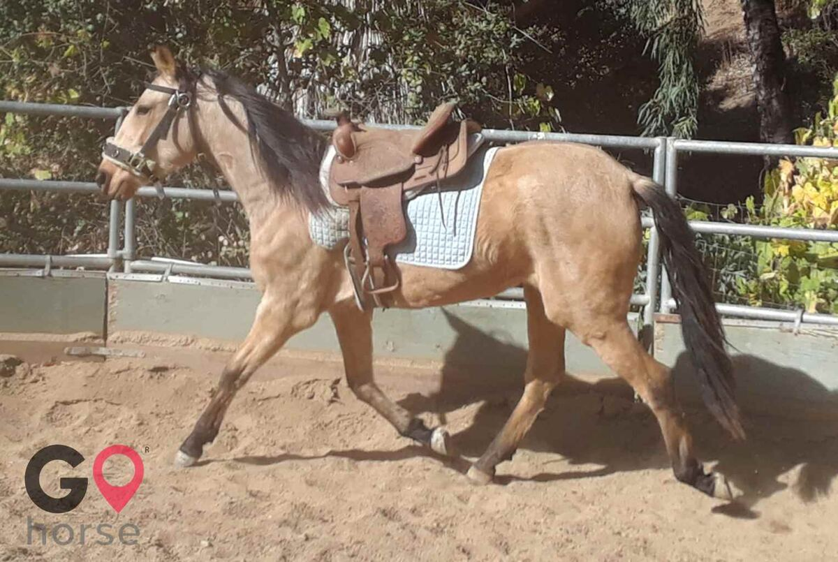 Back to Basics Horsemanship (horse trainer) a horse business in Poway CA 13
