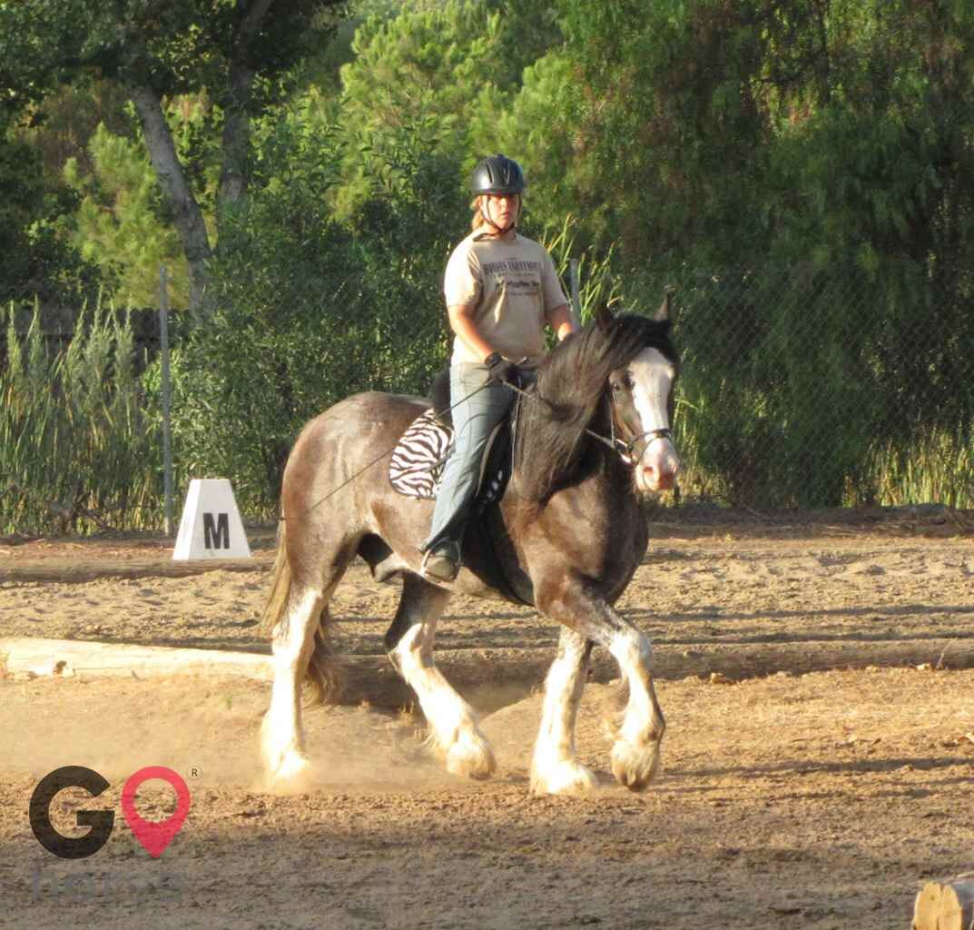 Back to Basics Horsemanship (horse trainer) a horse business in Poway CA 24