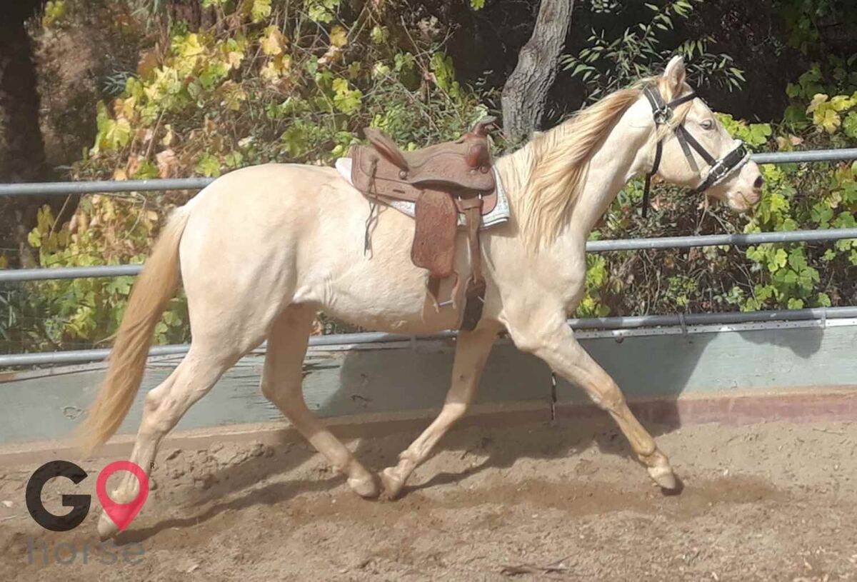 Back to Basics Horsemanship (horse trainer) a horse business in Poway CA 14