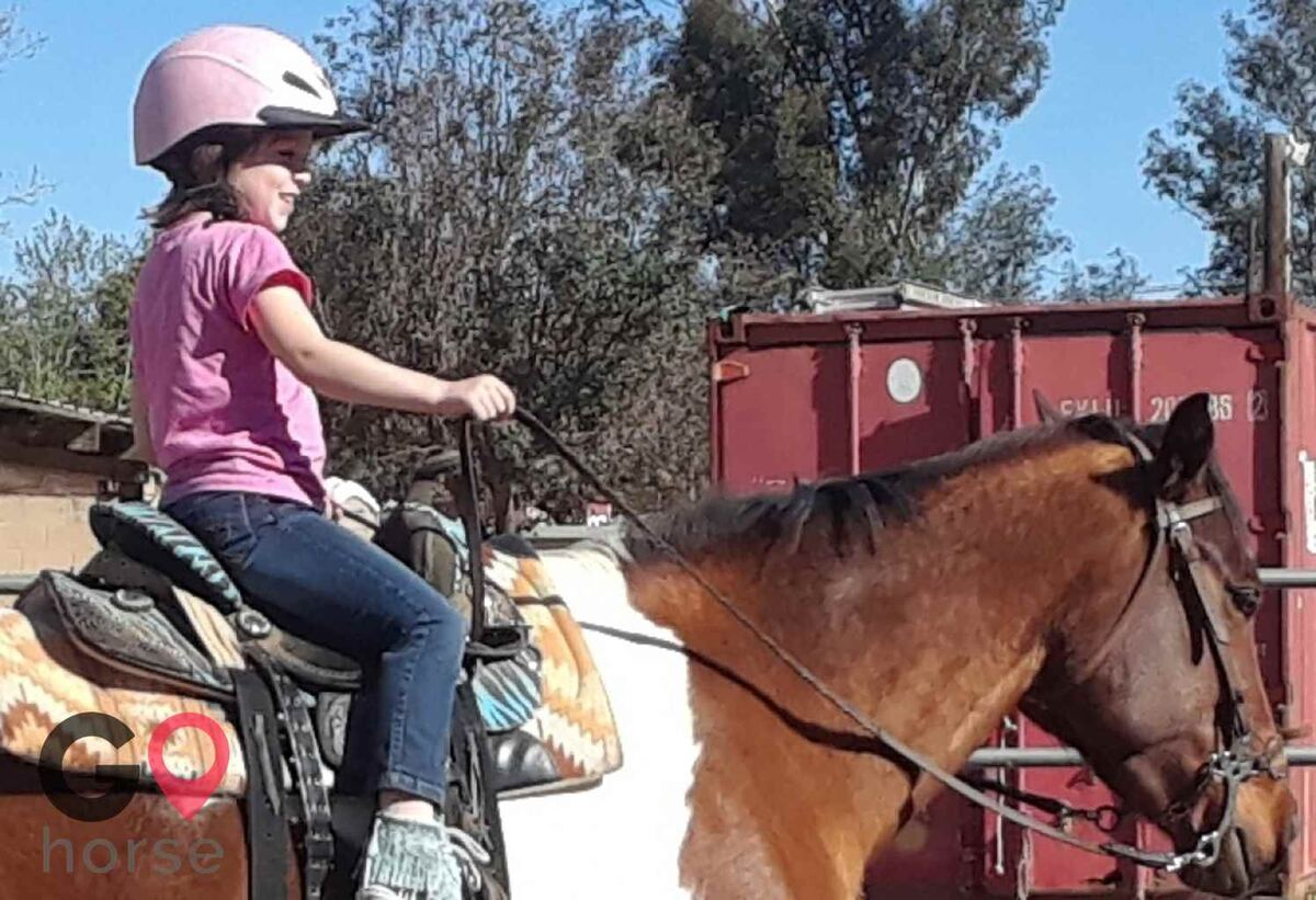 Back to Basics Horsemanship (horse trainer) a horse business in Poway CA 3