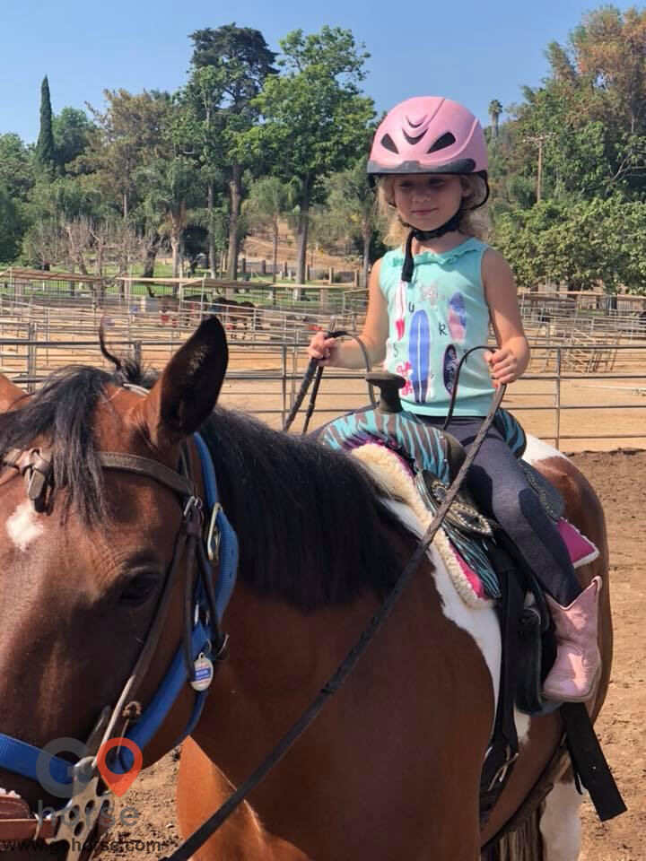 Back to Basics Horsemanship (horse trainer) a horse business in Poway CA 8