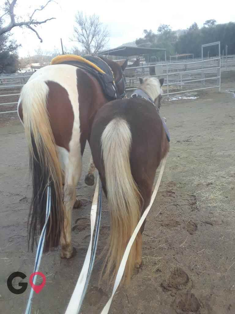 Back to Basics Horsemanship (horse trainer) a horse business in Poway CA 28
