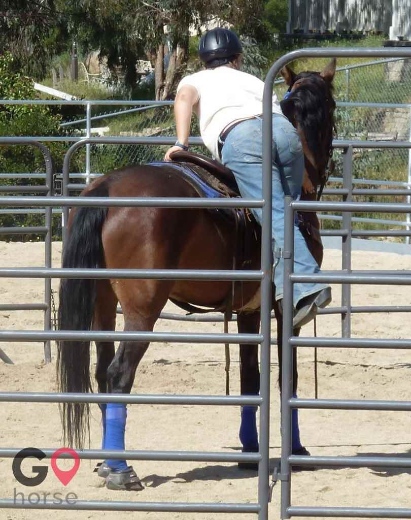Back to Basics Horsemanship (horse trainer) a horse business in Poway CA 18