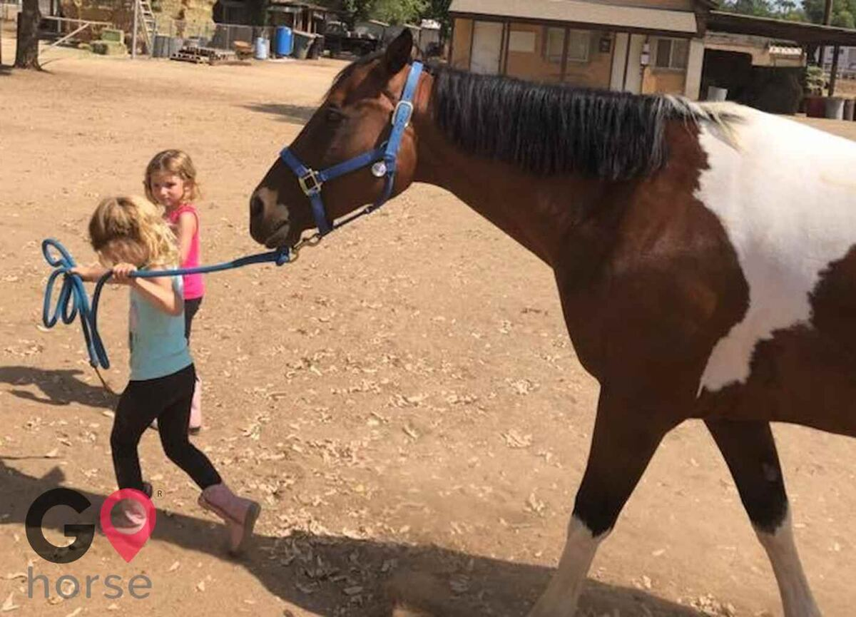 Back to Basics Horsemanship (horse trainer) a horse business in Poway CA 10