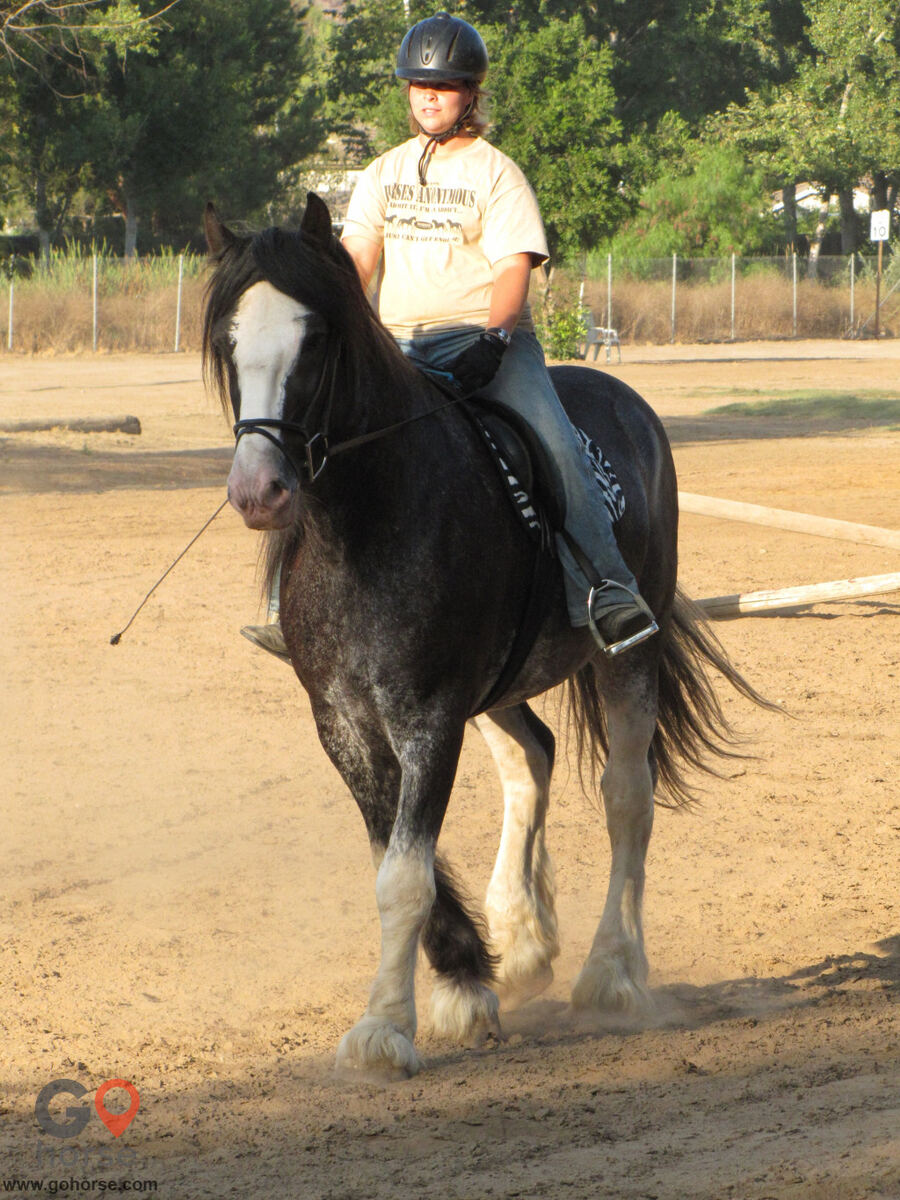 Back to Basics Horsemanship (horse trainer) a horse business in Poway CA 23