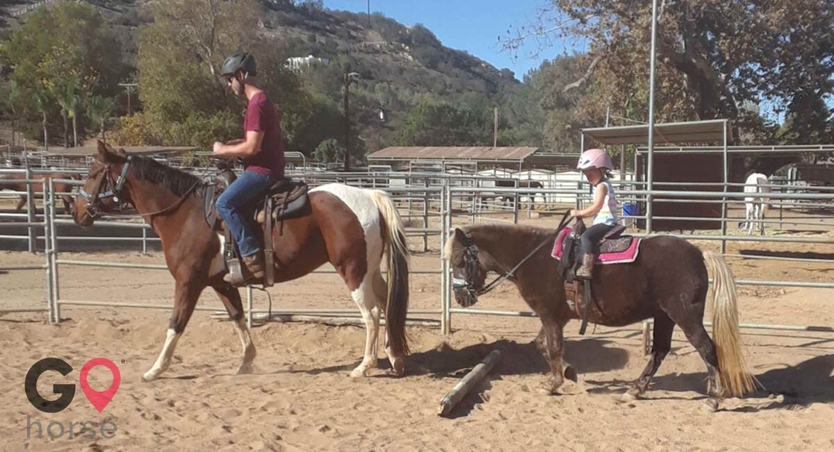 Back to Basics Horsemanship (horse trainer) a horse business in Poway CA 11