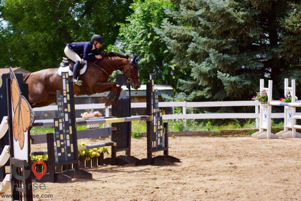 Four Winds Horse stables in Fort Collins CO 23