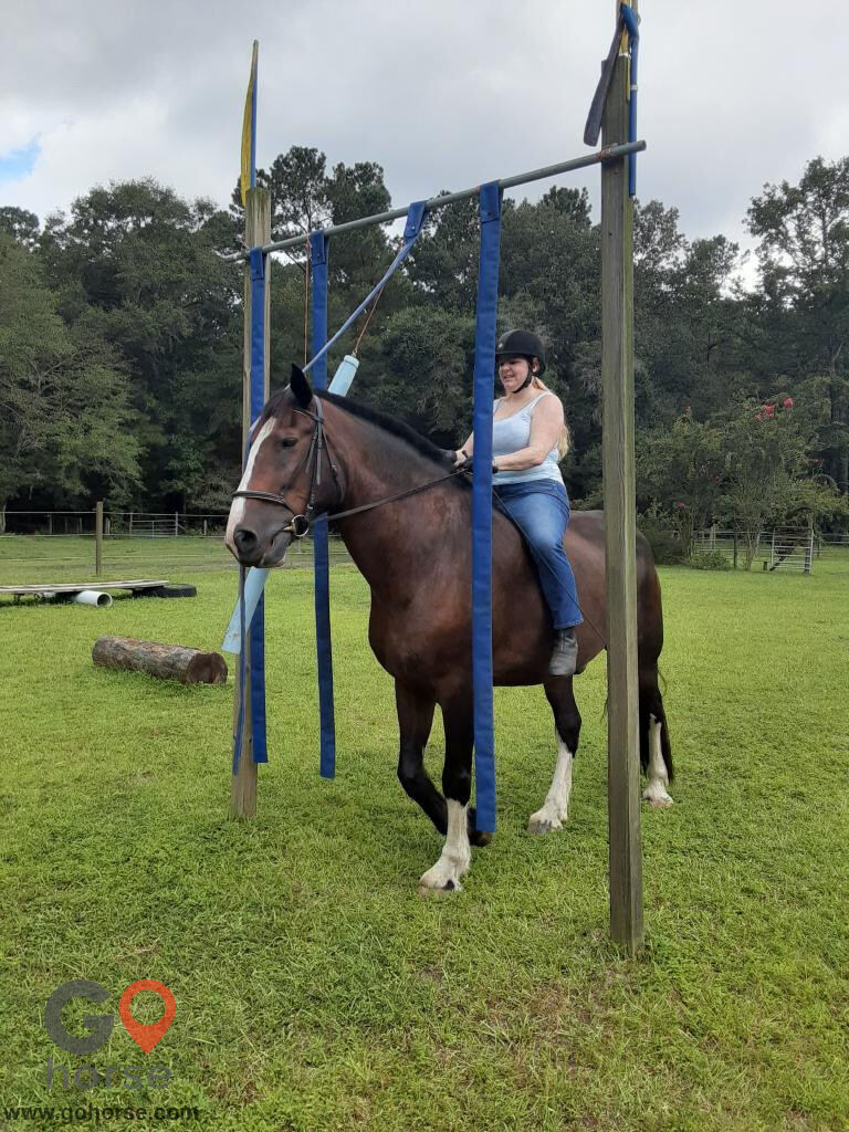 Chainey Briar Stables LLC Horse stables in Ridgeville SC 21