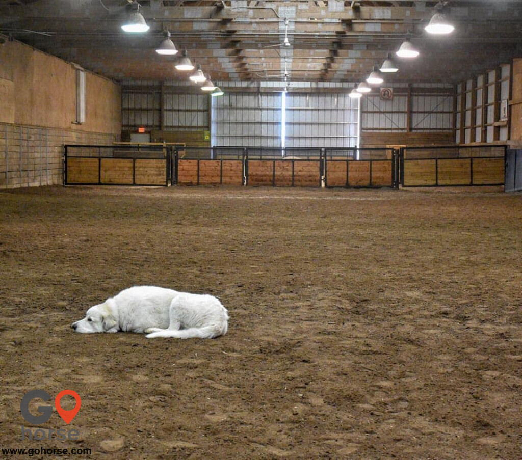 Wichita Riding Academy, Inc. Horse stables in Derby KS 6