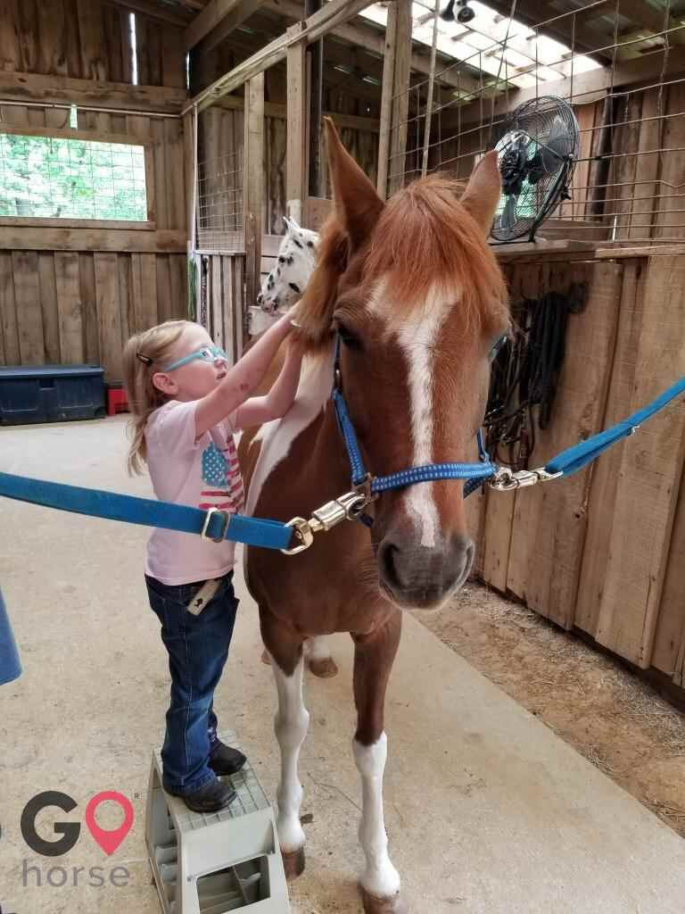 Raintree Equestrian Center Horse stables in Olive Branch MS 7