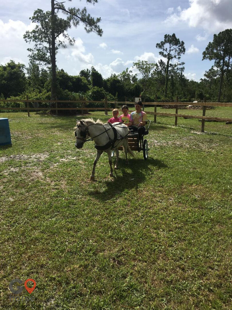 South Mountain Girls Ranch Horse stables in New Smyrna Beach FL 6