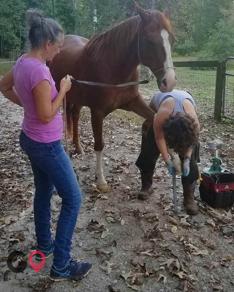 Equine Barefoot Trimming Farrier in Decatur GA 6