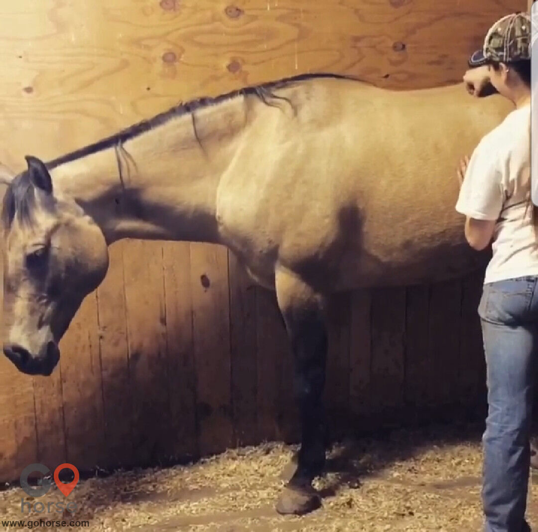 Hands on Hooves Equine Sports Massage Therapy Equine Health in Chester County PA 18