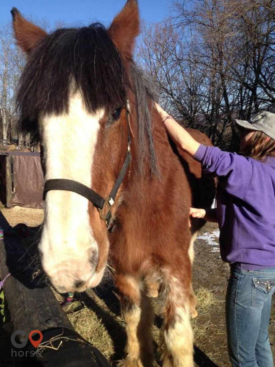 Hands on Hooves Equine Sports Massage Therapy Equine Health in Chester County PA 8