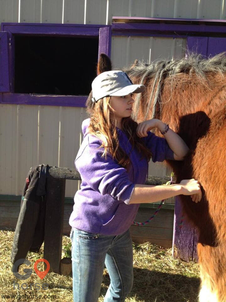 Hands on Hooves Equine Sports Massage Therapy Equine Health in Chester County PA 11