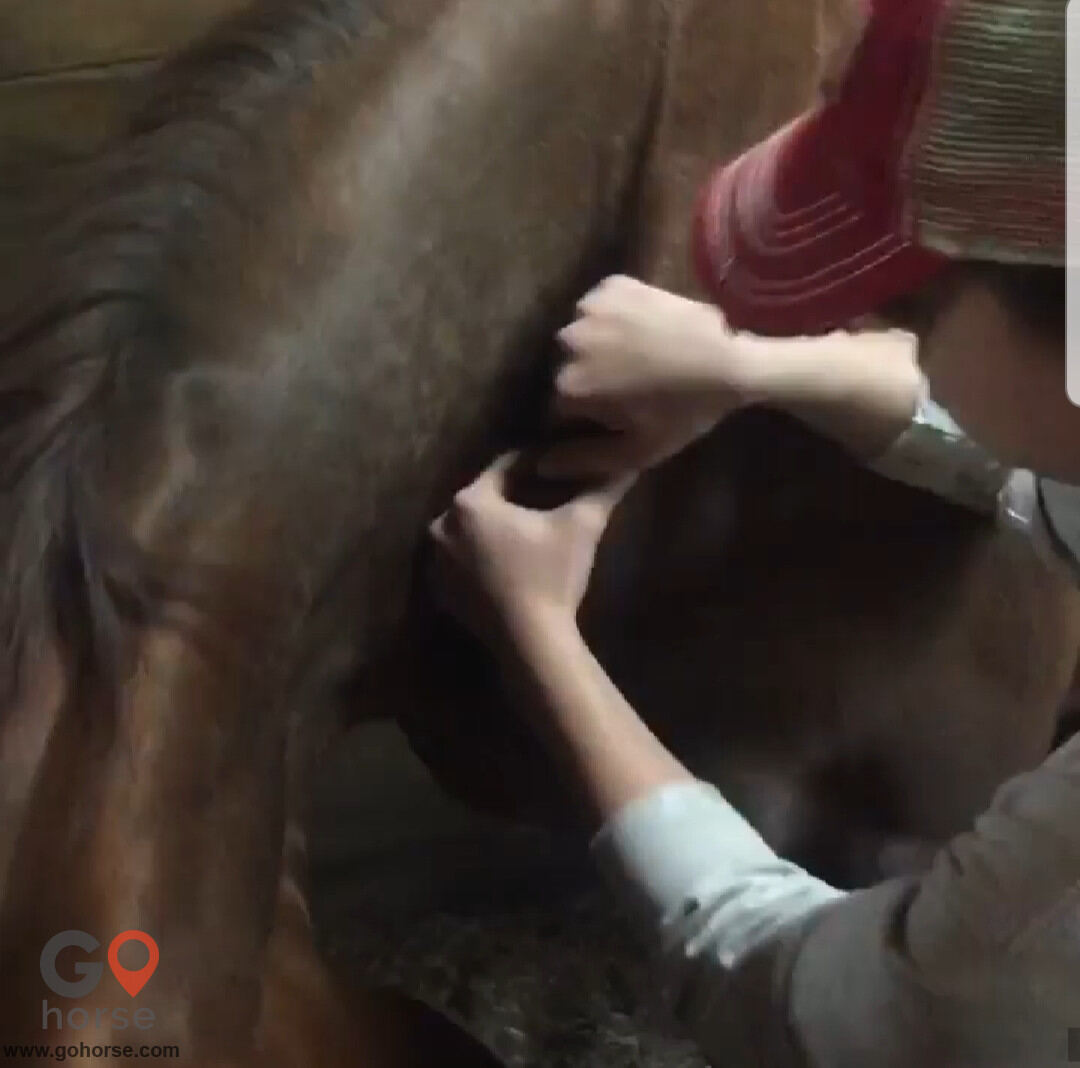 Hands on Hooves Equine Sports Massage Therapy Equine Health in Chester County PA 16