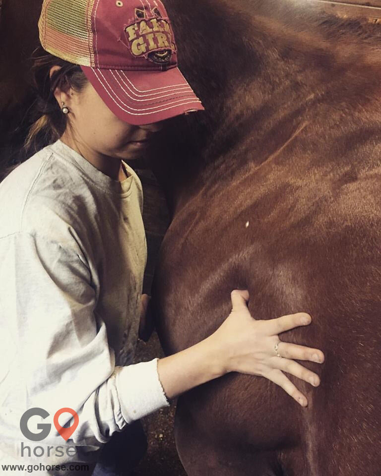 Hands on Hooves Equine Sports Massage Therapy Equine Health in Chester County PA 19
