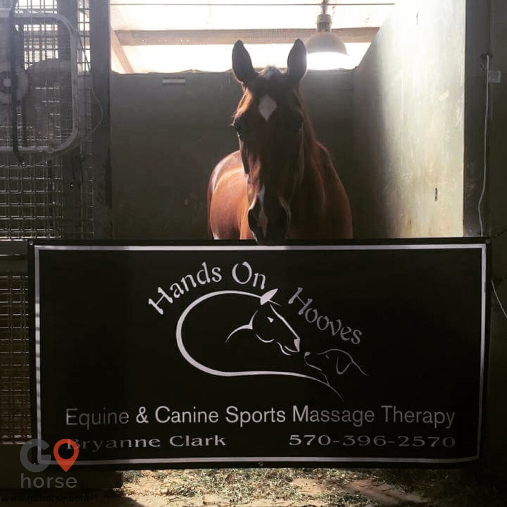 Hands on Hooves Equine Sports Massage Therapy Equine Health in Chester County PA 1