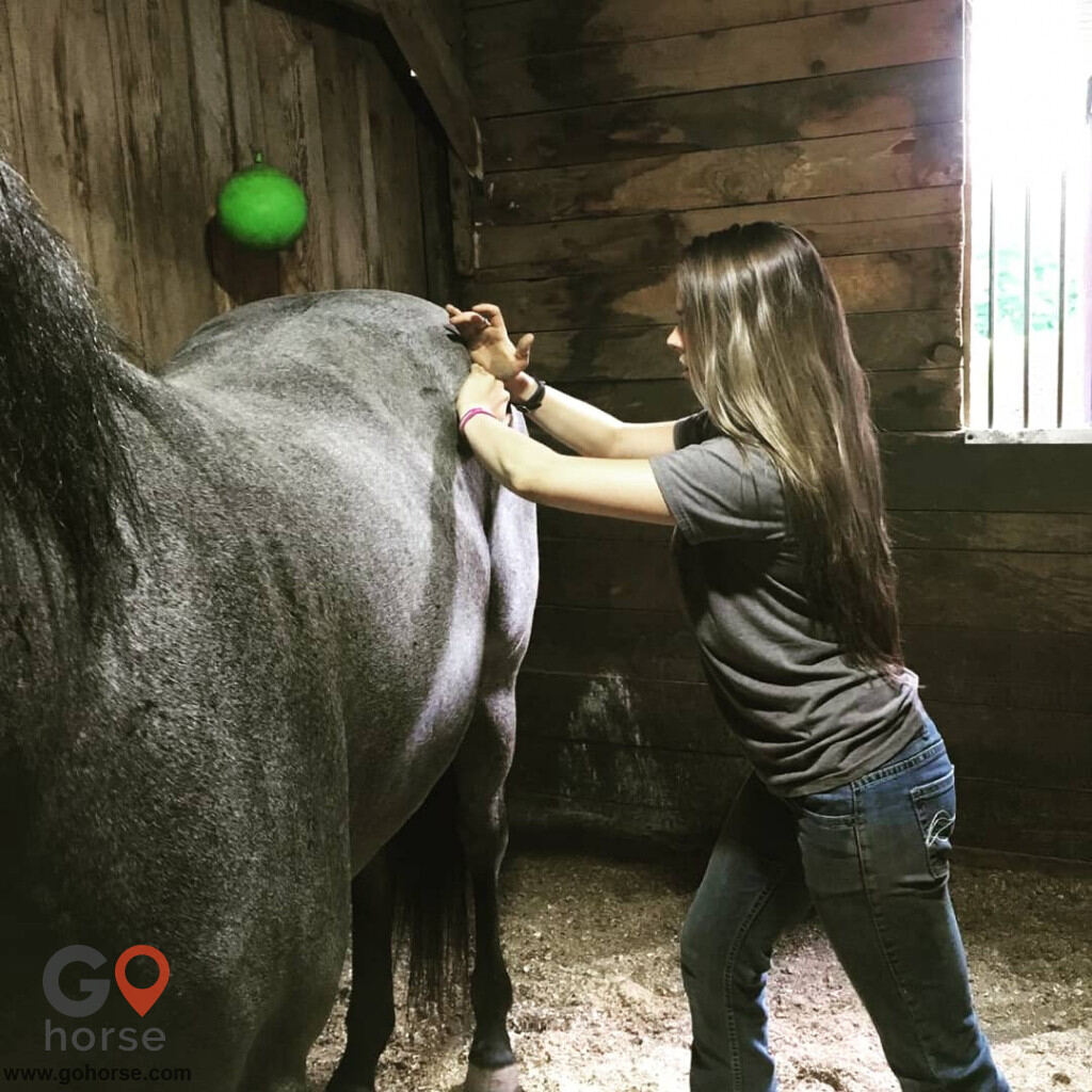 Hands on Hooves Equine Sports Massage Therapy Equine Health in Chester County PA 2