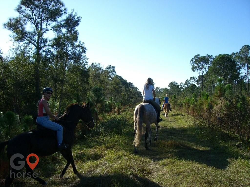 Endless Trails Stables Horse stables in North Fort Myers FL 4