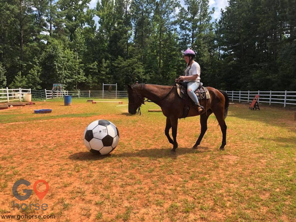 LauraLeigh Farms Horse stables in Dallas GA 7