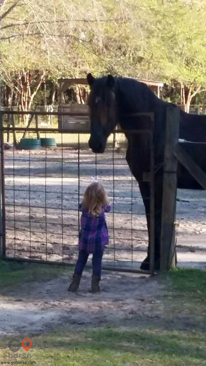 Chainey Briar Stables LLC Horse stables in Ridgeville SC 15
