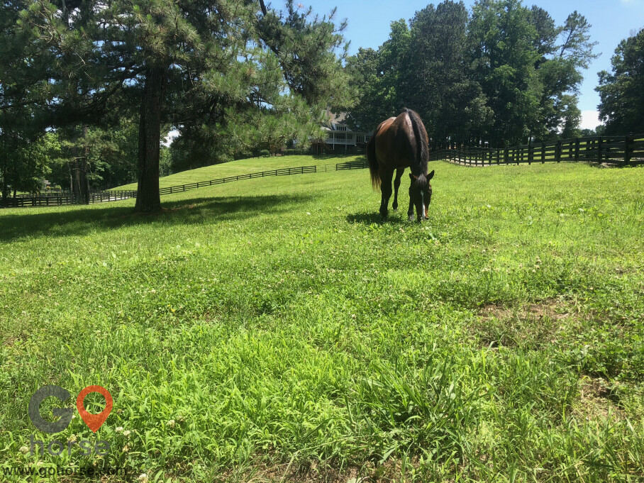 Tuff Competition Farms Horse stables in Canton GA 10