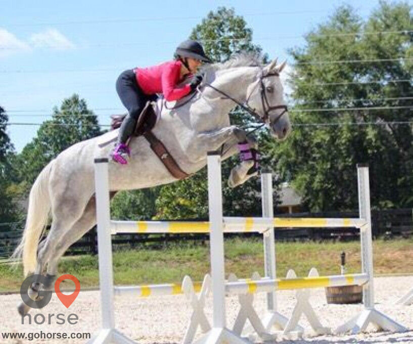 Tuff Competition Farms Horse stables in Canton GA 8