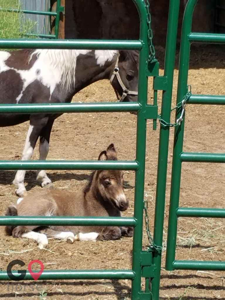 Triple C Stables Horse stables in Fort Lupton CO 13