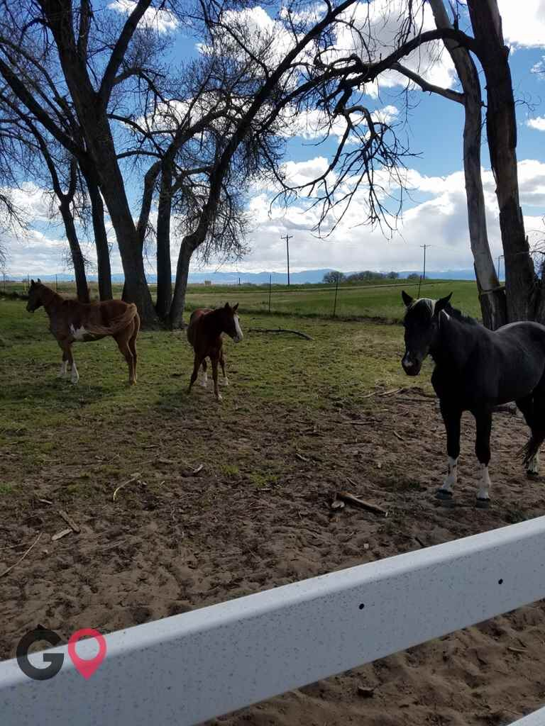 Triple C Stables Horse stables in Fort Lupton CO 12