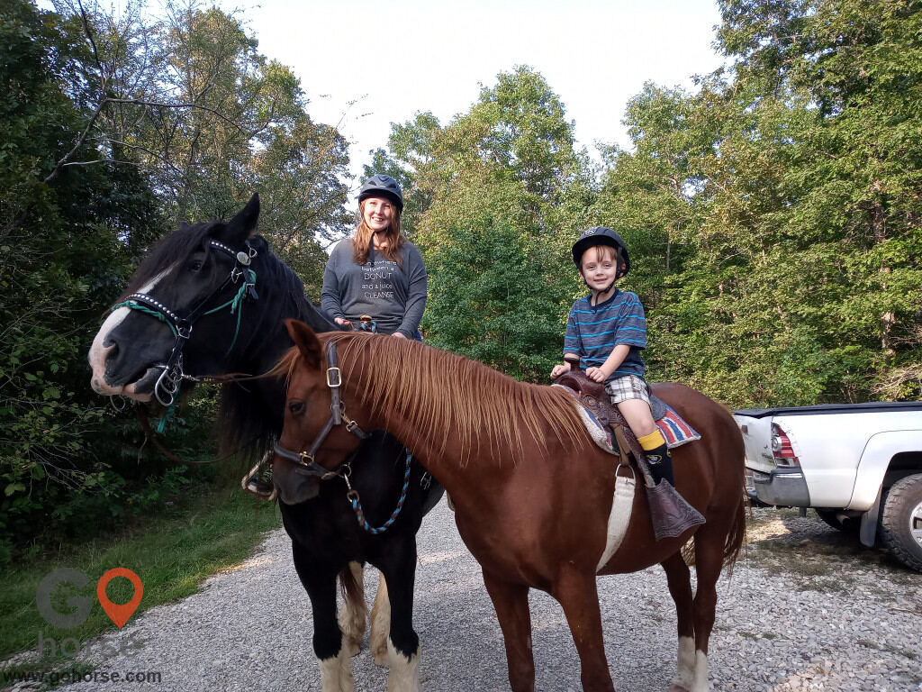 Summit's Valley Shire and Sport Horses, LLC Horse stables in Horseshoe Bend AR 5
