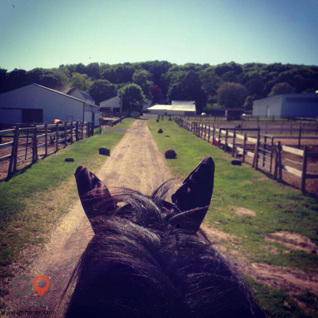 Bear Paw Barn Horse stables in Middletown CT 2